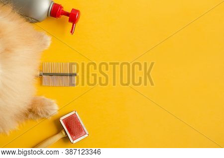 Accessories, Items And Equipment For Pet Care. Paws, Shampoo, Comb, Brush For Grooming, Clean A Fluf