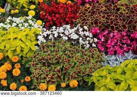 Coleus, Marigold, Begonia And Other Ornamental Plants Planted In Even Squares In A Large Flower Bed.