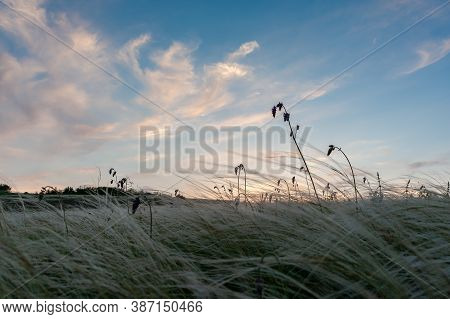 Landscape With Spring In Steppe, Clouds In Sky. Floral Meadow With Grass, Panorama, Lowland