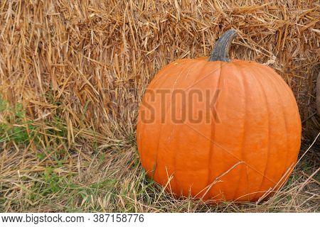 Thanksgiving.halloween. Pumpkins Orange Near A Bale Of Hay. Pumpkin Farmer's Market. Autumn Vegetabl