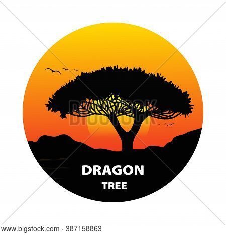 Dragon Blood Tree Silhouette At Sunset. Vector Illustration.