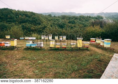 Beehives In An Apiary In A Meadow Overlooking The Forest And Mountains. Apiculture.
