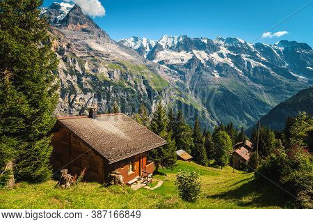 Wooden Houses On The Forest Glade And High Snowy Mountains In Background, Murren, Bernese Oberland,