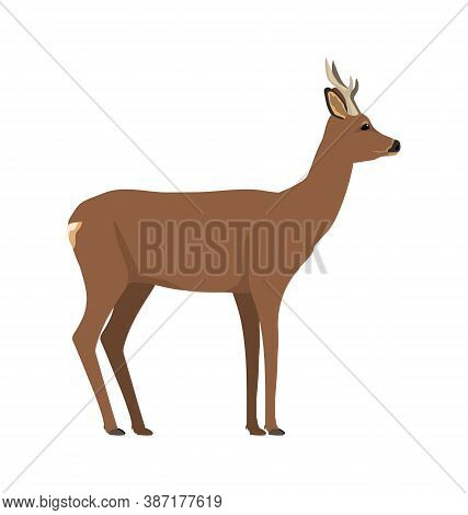 Capreolus Capreolus - Roe Deer - Male - Side View - Flat Vector Isolated