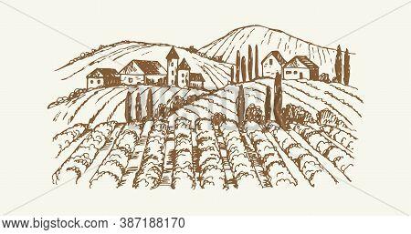 Sketch Village Landscape. Vintage Vineyard Farm, Hand Drawn Agricultural Plantation With Rustic Hous