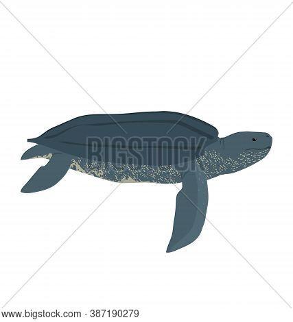 Dermochelys Coriacea - Leatherback Sea Turtle - Side View - Flat Vector Isolated
