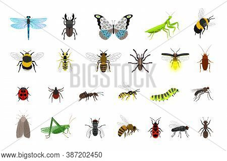 Cute Insects Collection. Cartoon Small Colorful Beetles And Caterpillars, Bugs And Butterfly, Vector