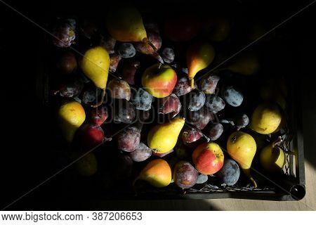 Autumn Harvest Of Fruit And Sunrays In Studio