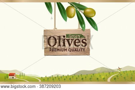 Green Olive Label With Realistic Olive Branch On Green Olive Farm Background, Design For Canned Oliv