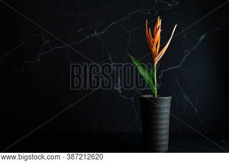 Orange Flower In Pot In The Dark, Side Light, Copy Space.