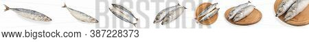 Set Frozen Mackerel On A White Background With Clipping Path. Set Of Fresh Raw Scomber For Design. D