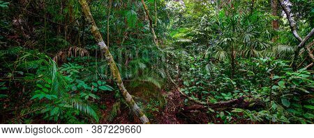 Beautiful Landscape Nature Of Tropical Rain-forest In Thailand. Banner Side