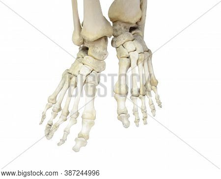 A Pair Of Human Legs, Skeleton Of Foot And Toe Bones, Ankle, Heels. Isolated On White