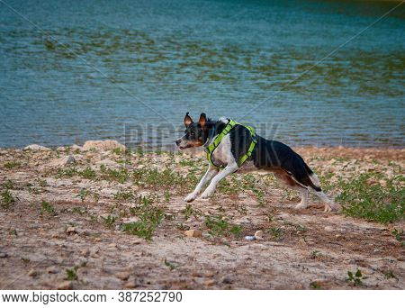 Dog In A Lake On Top Of A Stone Posing With A Blue Sky