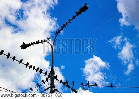 Many Pigeons Sitting On Wires And Lampposts Against A Blue Sky With Clouds