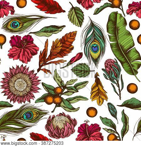 Seamless Pattern With Hand Drawn Colored Banana Palm Leaves, Hibiscus, Solanum, Bromeliad, Peacock F