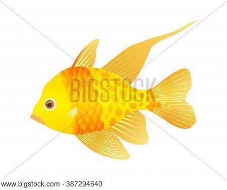 Decorative Sea Or Aquarium Fish On White Background. Freshwater Or Saldwater Aquarium Cartoon Fish.