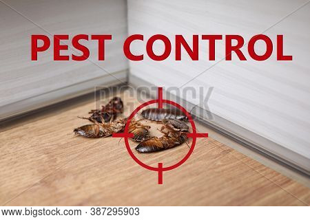 Cockroach With Red Target Symbol On Wooden Surface. Pest Control