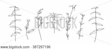 Hand Drawn Wild Flower Collection. Outline Herbs With Leaves Painted By Ink. Black Isolated Sketch V
