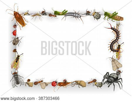 Frame With Insects Vector Bedbug, Flea And Cockroach With Ant, Wasp, Fly And, Mosquito. Aphid, Locus