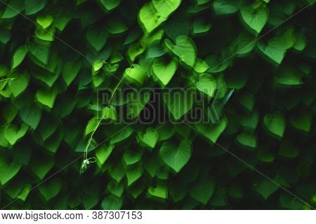 The Texture Of The Grape Leaves Shot On A Slow Shutter Speed