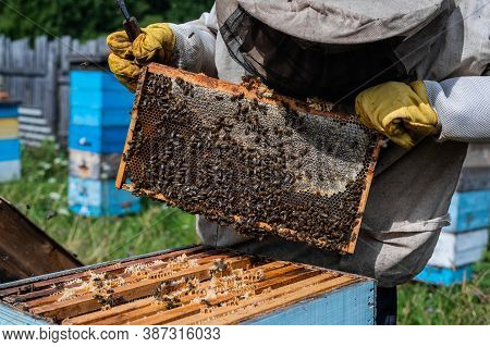 The Beekeeper Looks After Bees, Honeycombs Full Of Honey, In A Protective Beekeepers Suit At Apiary.