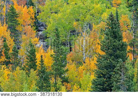 Fall Colors On The Trees In Rocky Mountain National Park In Colorado In Autumn