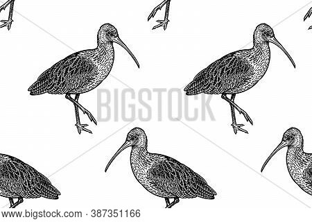 Cute Birdies Ibises In Profile. Seamless Pattern. Black Graphics On A White Background. Vector Illus