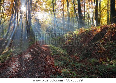 Autumnal forest and sun rays with mist,  Poland , Ojcow, National Park.