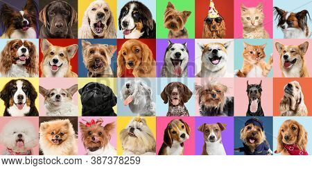 Stylish Adorable Dogs And Cats Posing. Cute Pets Happy. The Different Purebred Puppies And Cats. Art