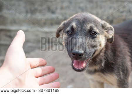 Hand Reaches For A Stray Little Stray Dog
