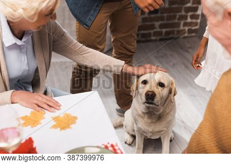 Partial Of Senior Woman Stroking Golden Retriever Near Multiethnic Family On Thanksgiving Day