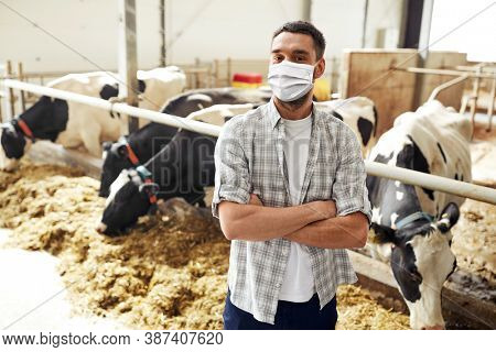 agriculture industry, farming and animal husbandry concept - young man or farmer wearing face protective medical mask for protection from virus disease with herd of cows in cowshed on dairy farm