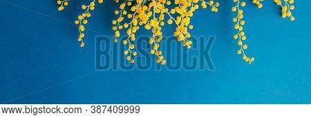 Mimosa Branch On A Blue Background. Copy Spice