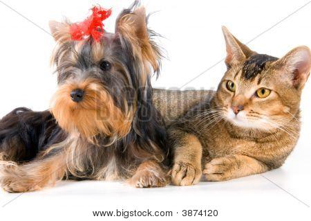 Puppy And Kitten
