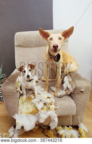 Two Dogs Puppies Caught Red-handed After Bite And Chewing A Sofa And Couldn't Hide Their Guilt.