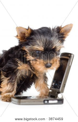 Puppy With A Mobile Phone