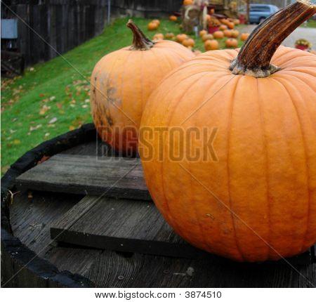 Pumpkinsonbarrel