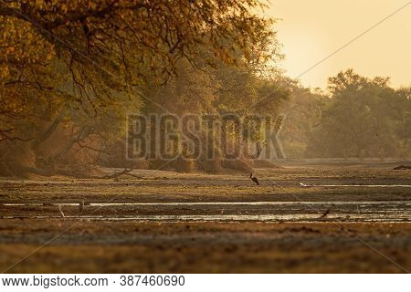 Landscape Scenery In Mana Pools National Park In Zimbabwe, Africa With Saddle-billed Stork (ephippio