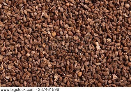 Anise Seeds Background. Anise Seeds Close Up. Lots Of Anise Seeds.