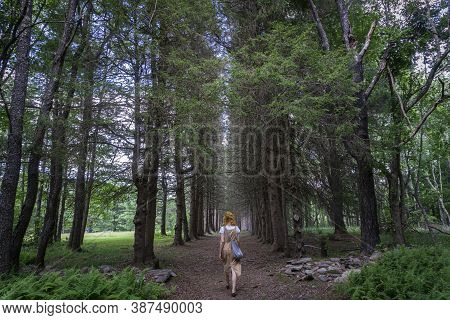 Woman Walking In A Pine Tree Alley. Beautiful And Mysterious Walkway Lane Path In Forest During Summ