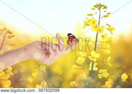 Woman Holding Beautiful Plain Tiger Butterfly In Flower Field, Closeup. Bokeh Effect
