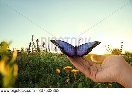 Woman Holding Beautiful Morpho Butterfly Sunlit In Field, Closeup