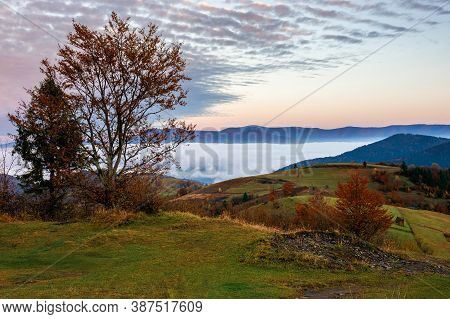 Stunning Rural Landscape. Foggy Scenery At Dawn In Autumn Season. Trees On Mountain Hills In Colorfu