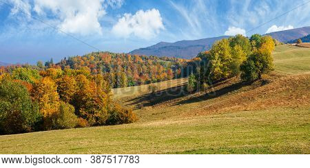Autumn Landscape In Mountains. Beech Trees On The Grassy Hill. Wonderful Sunny Weather On A Sunny Mo