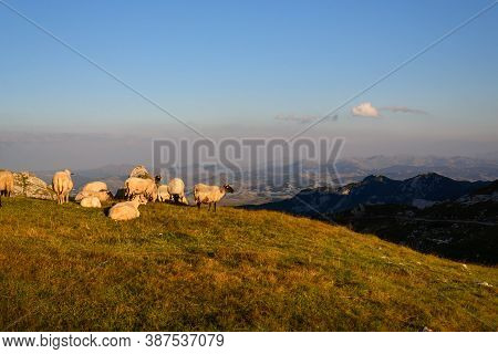 Sunset In Mountain Landscape. Landscape With Sheep In Sunset. Nature Landscape. Sunset In Mountain M