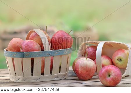 Group Of Red Apples In Little Basket On A Wooden Table In Garden On Green Background