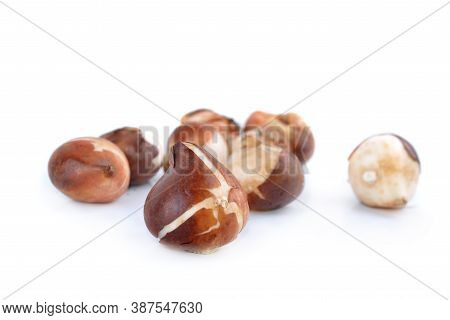 Close On A Tulip Bulb In Front Of Others Bulbs Isolated On White Background