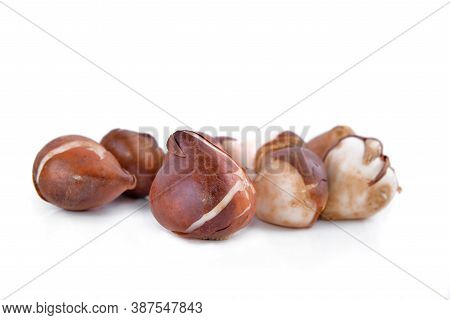Group Of Tulip Bulbs Isolated On White Background