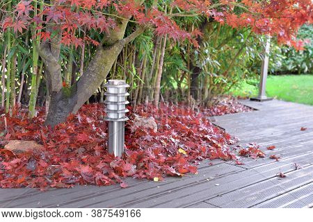 Heap Of Red Leaves Of Japanese Maple Falled On A Wooden Terrace